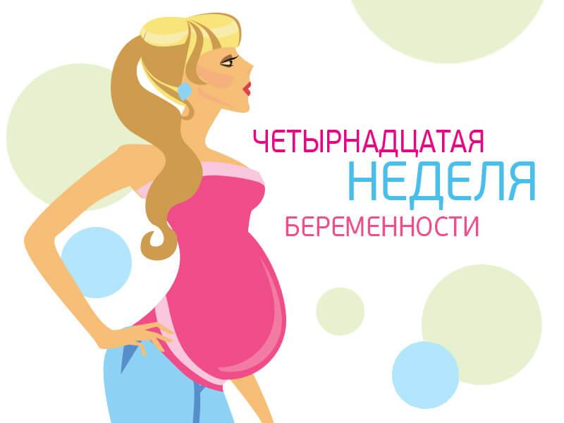 14 неделя беременности
