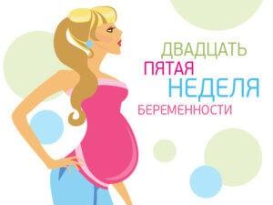 25 неделя беременности