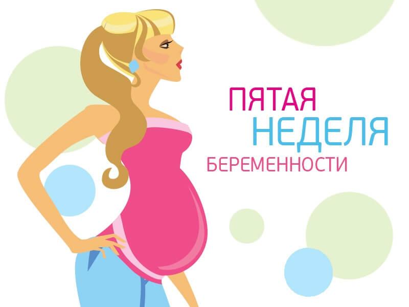 5 неделя беременности: что происходит